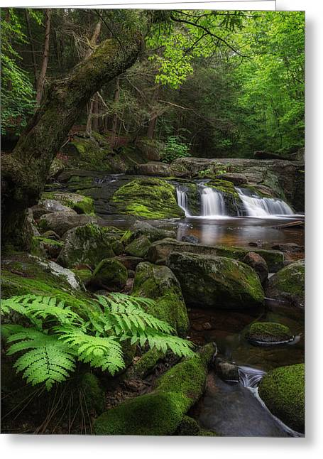 Woodland Falls Greeting Card by Bill Wakeley