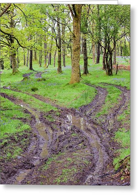 Woodland Floor Ripped Up By A Tractor Greeting Card by Ashley Cooper