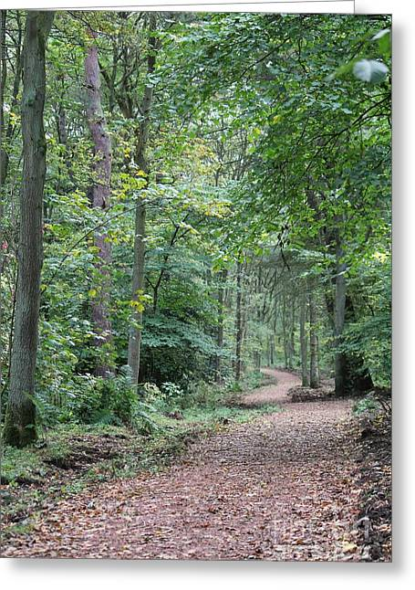 Woodland Path Greeting Card by David Grant