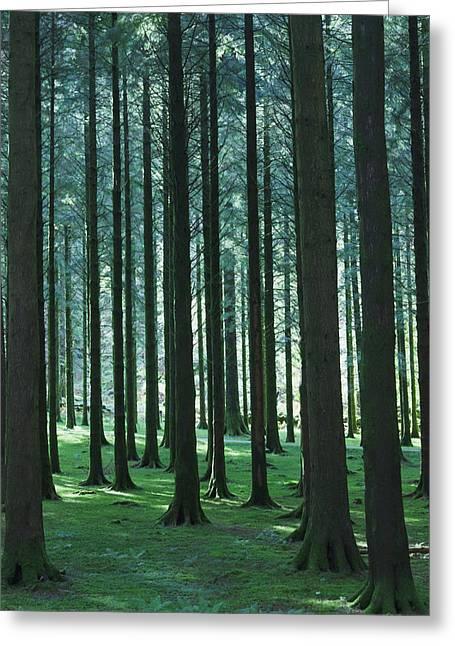 Woodland Scene In Gougane Barra Forest Greeting Card