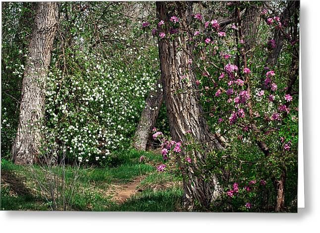 Woodland Spring With Cherry Blossoms Greeting Card by Julie Magers Soulen