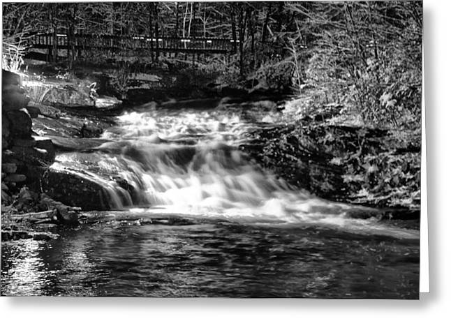 Woodland Stream Greeting Card by Bill Cannon