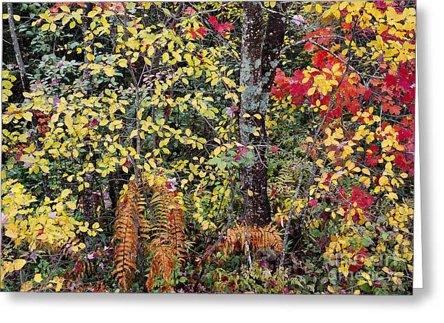 Greeting Card featuring the photograph Woodland Tapestry by Alan L Graham