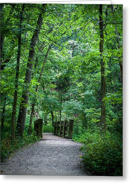 Greeting Card featuring the photograph Woodland Trail by Wayne Meyer
