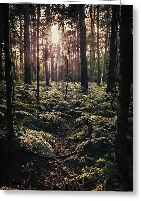 Woodland Trees Greeting Card by Amanda Elwell