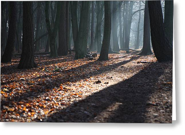 Woodland Walk Greeting Card by Mike Allison