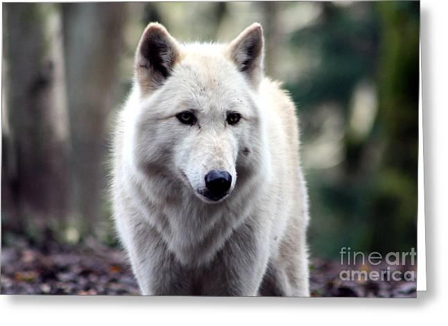 Woodland White Wolf Greeting Card