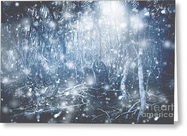 Woodland Wonderland Greeting Card by Jorgo Photography - Wall Art Gallery