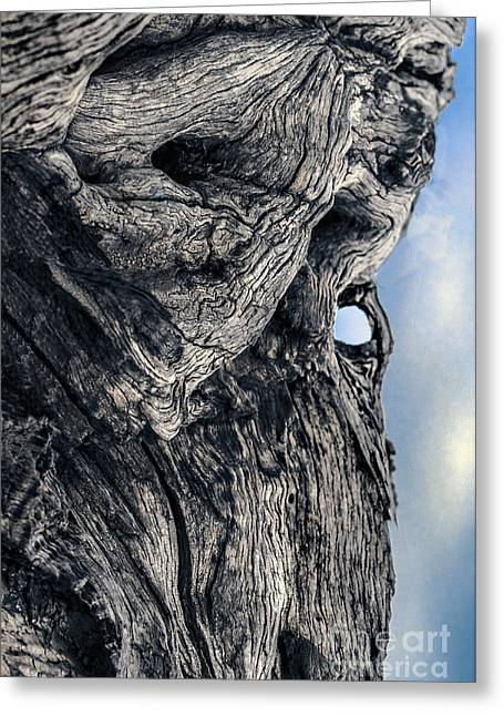 Woodman Greeting Card by Petros Yiannakas