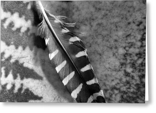Woodpecker Feather Greeting Card