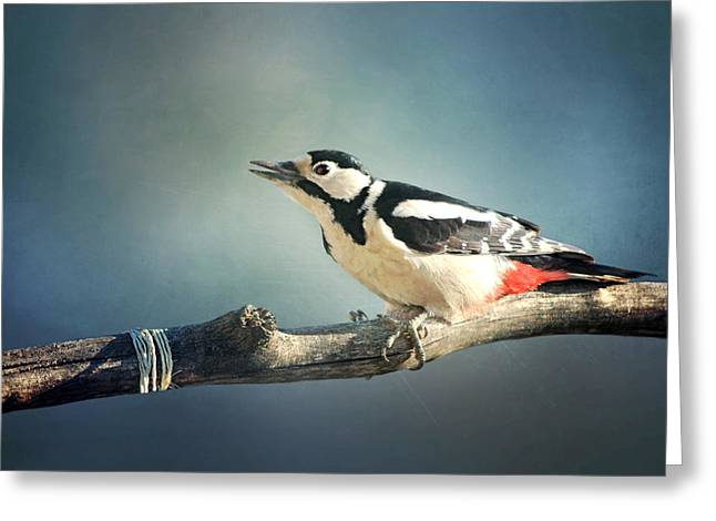Woodpecker In Summer Greeting Card by Heike Hultsch