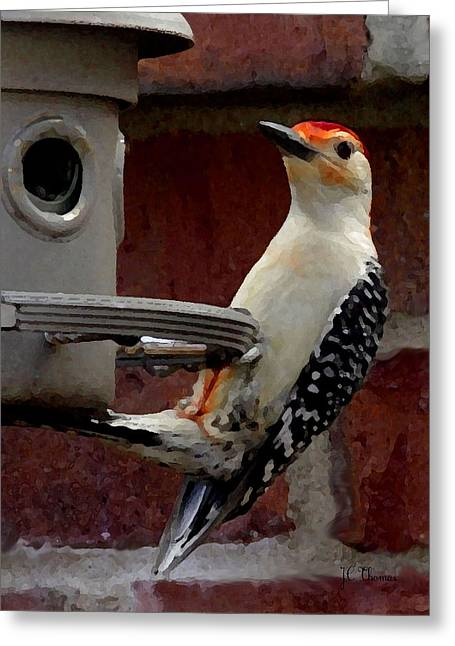 Greeting Card featuring the photograph Woodpecker Red Bellied by James C Thomas