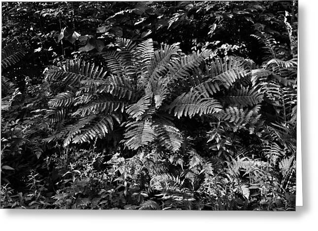 Wood's Ferns  Greeting Card