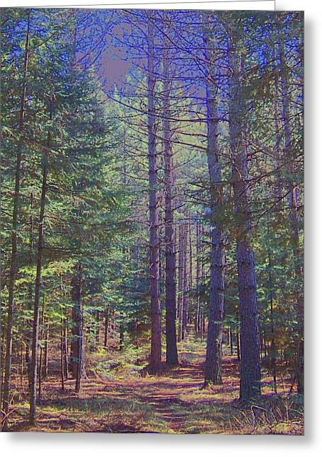 Woods II Greeting Card by Shirley Moravec