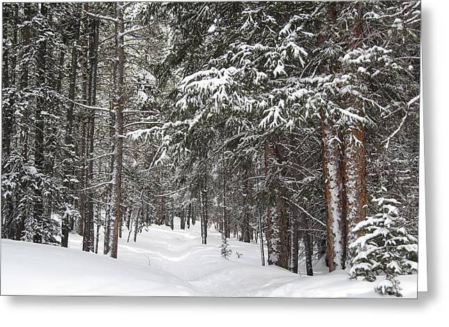 Woods In Winter Greeting Card by Eric Glaser