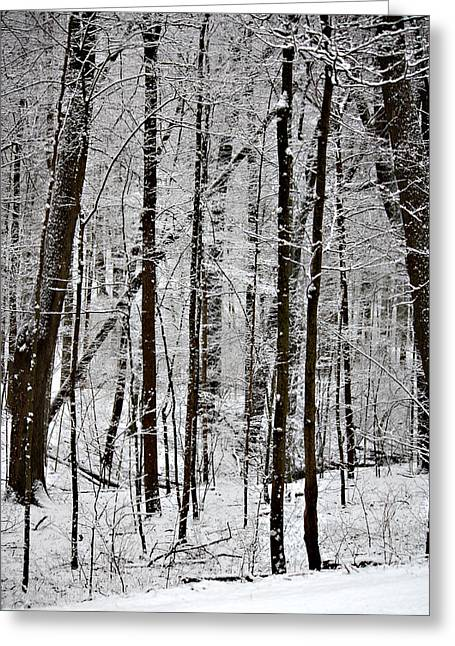 Woods On A Snowy Night Greeting Card