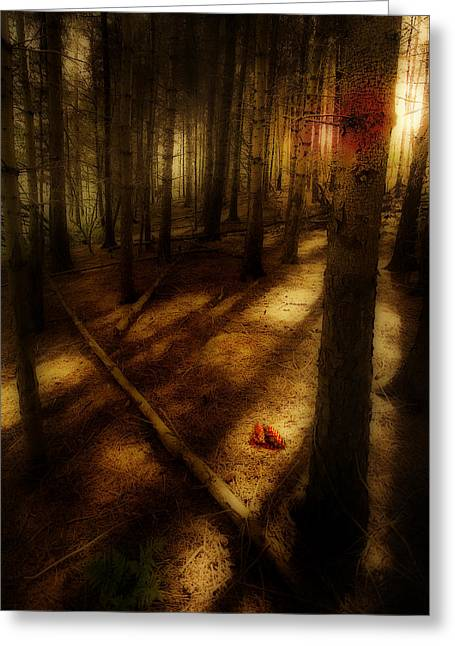 Greeting Card featuring the photograph Woods With Pine Cones by Meirion Matthias
