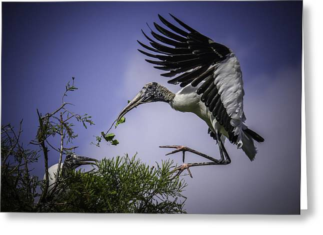 Woodstork Delicate Landing Greeting Card