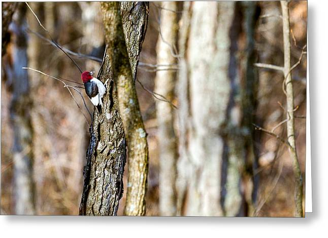Greeting Card featuring the photograph Woody by Sennie Pierson