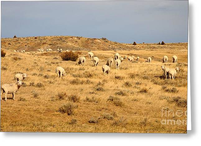 Wool You Sheep With Me Greeting Card