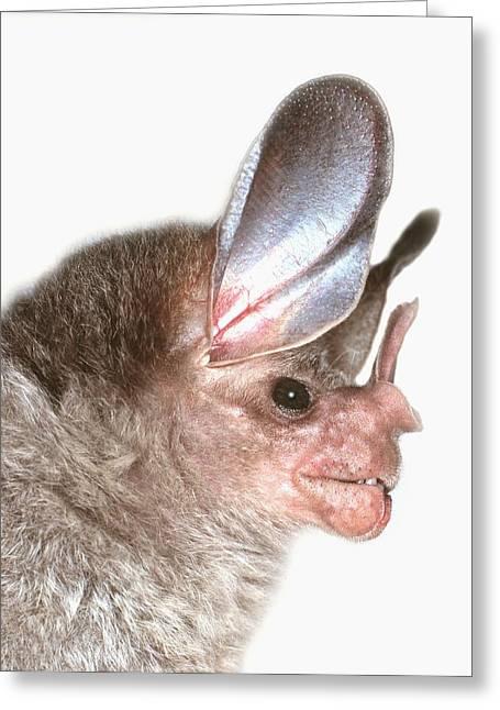 Woolly False Vampire Bat Greeting Card