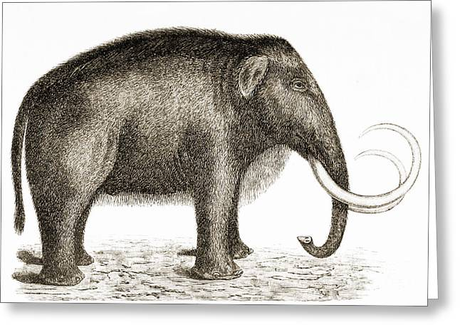 Woolly Mammoth Greeting Card by British Library