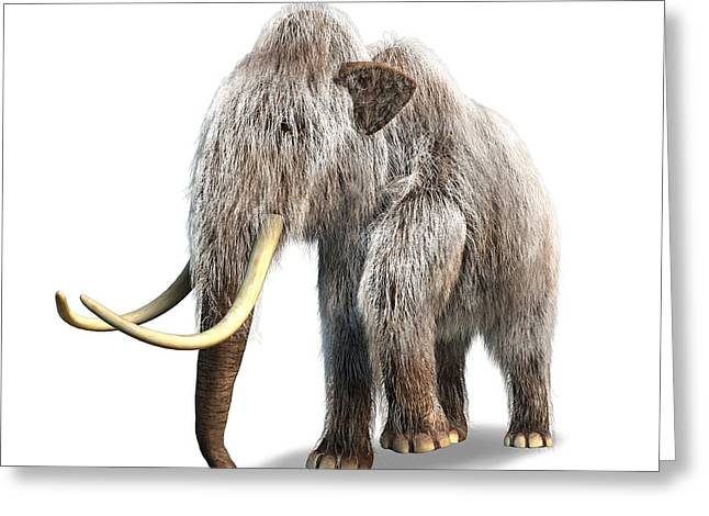 Woolly Mammoth, White Background Greeting Card