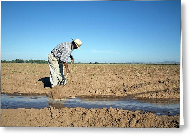 Worker Digging Irrigation Channels Greeting Card