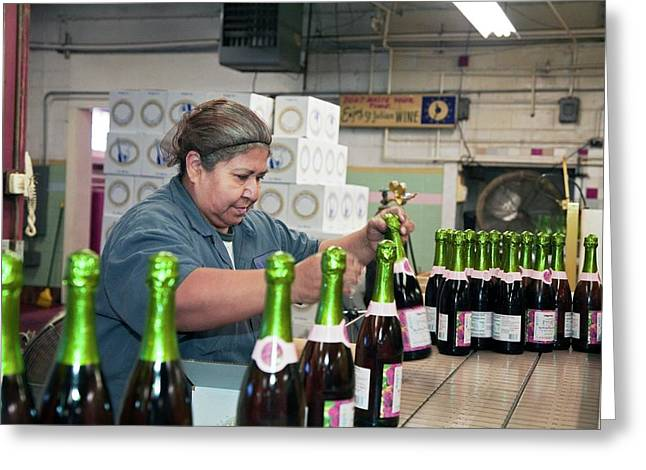 Worker Packing Bottles At A Winery Greeting Card by Jim West