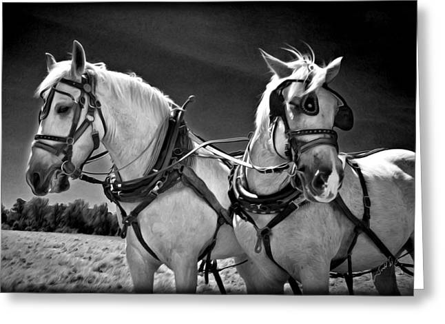 Workhorses Greeting Card by Williams-Cairns Photography LLC