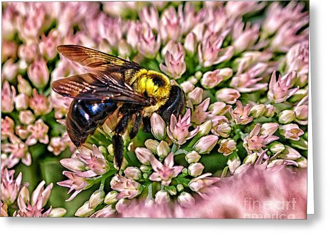 Busy Bee Greeting Card by JRP Photography