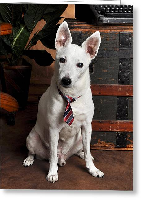 Working Class Dog In Tie Greeting Card