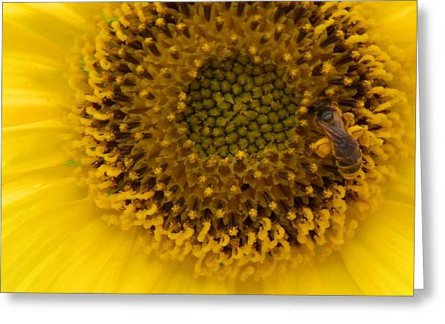 Working Honey Bee Greeting Card