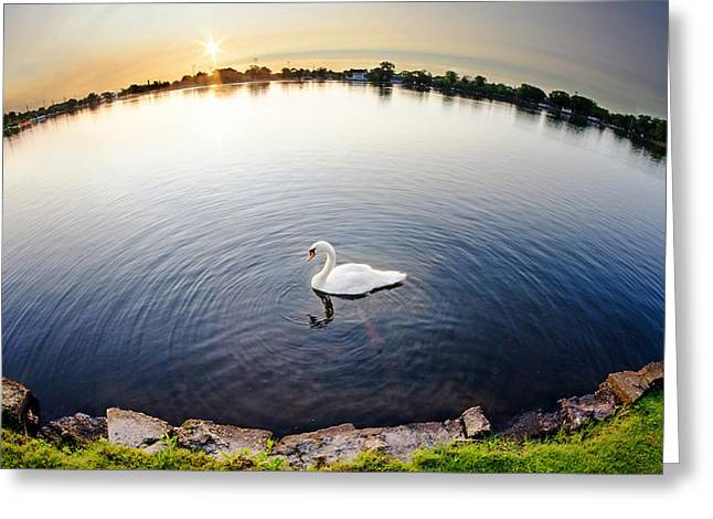 World Of A Swan Greeting Card by Vicki Jauron