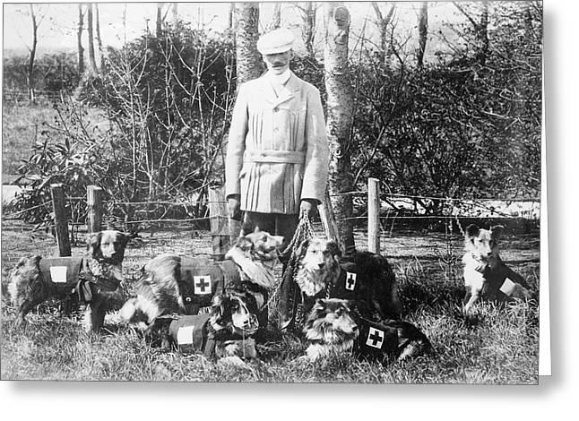 World War I British Red Cross Dogs Greeting Card