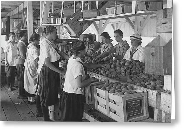 World War I Farmerettes Packing Peaches Greeting Card