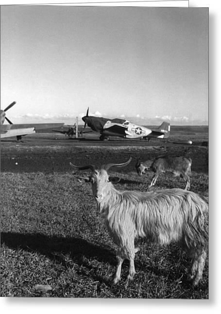 World War II: Airfield Greeting Card by Granger