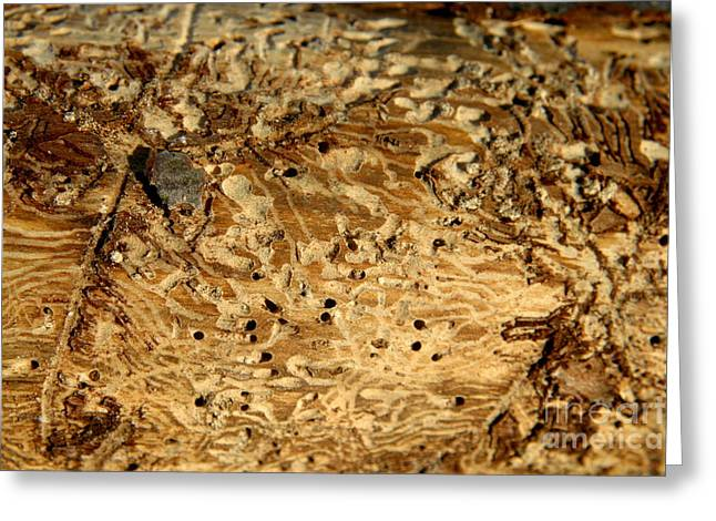 Greeting Card featuring the photograph Worm Wood - 1 by Kenny Glotfelty