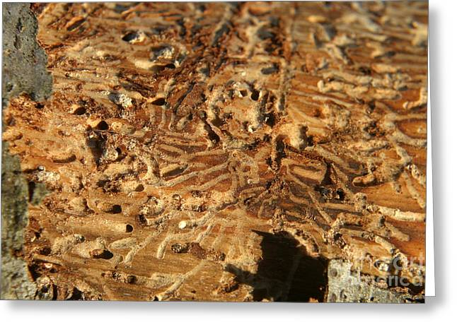 Greeting Card featuring the photograph Worm Wood - 4 by Kenny Glotfelty