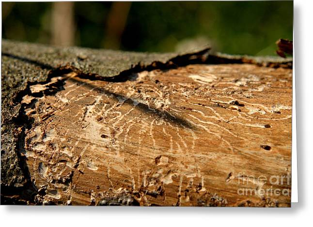 Greeting Card featuring the photograph Worm Wood - 5 by Kenny Glotfelty