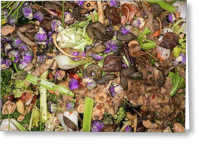 Worms And Slugs In A Compost Bin Greeting Card by David Parker