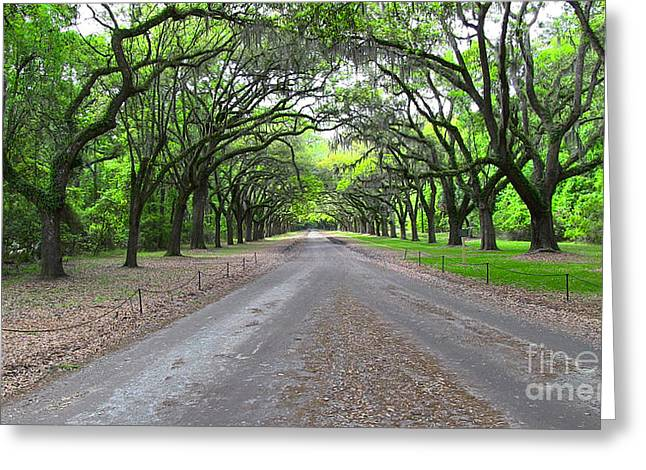 Wormsloe Drive Greeting Card by D Wallace
