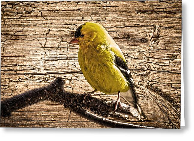 Wormy Wood American Goldfinch Greeting Card