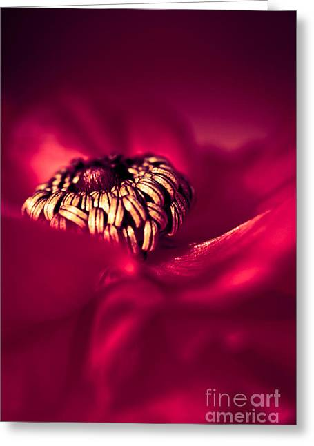 Wrap Me In Red Greeting Card by Jan Bickerton