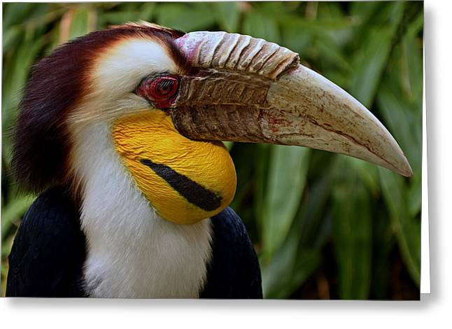 Wreathed Hornbill Greeting Card by Eric Albright
