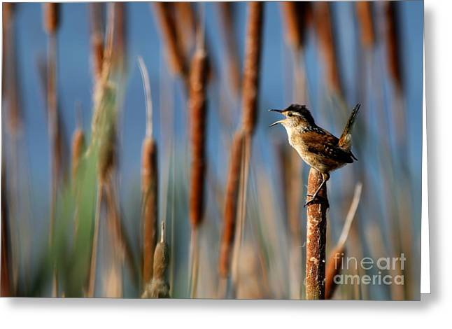 Wren Singing Greeting Card