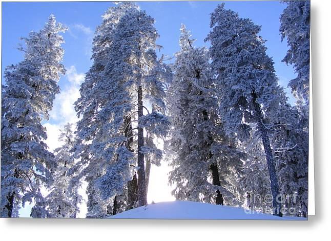Winter Time In Postavaru Mountains Greeting Card by Dan Marinescu