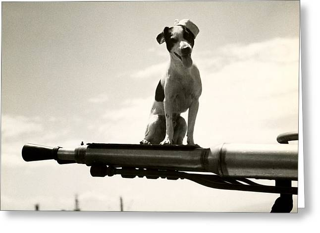 Wwii Uscg Mascot Named Kelly Greeting Card by Historic Image