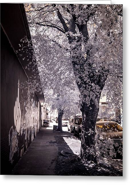 Wynwood Treet Shadow Greeting Card