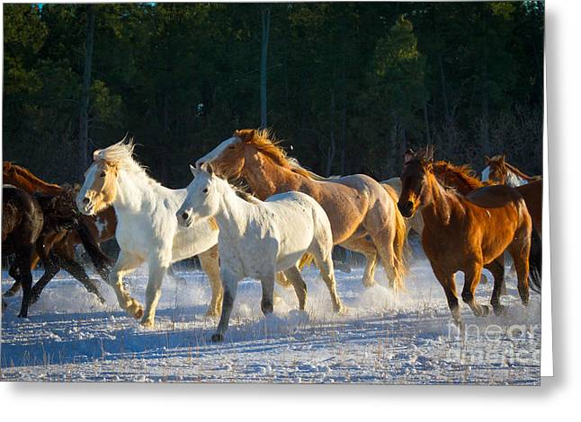 Wyoming Horses Greeting Card by Inge Johnsson
